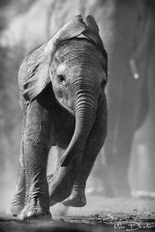 Beautiful Baby Elephant Pictures (23)
