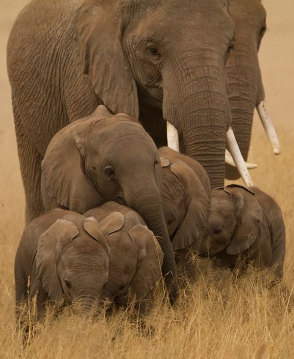 Beautiful Baby Elephant Pictures (25)