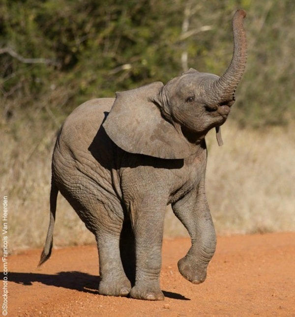 Beautiful Baby Elephant Pictures (30)