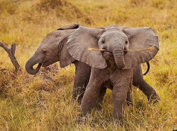 Beautiful Baby Elephant Pictures (32)