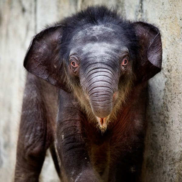 Beautiful Baby Elephant Pictures (34)