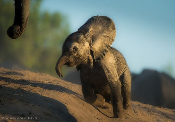 Beautiful Baby Elephant Pictures (35)