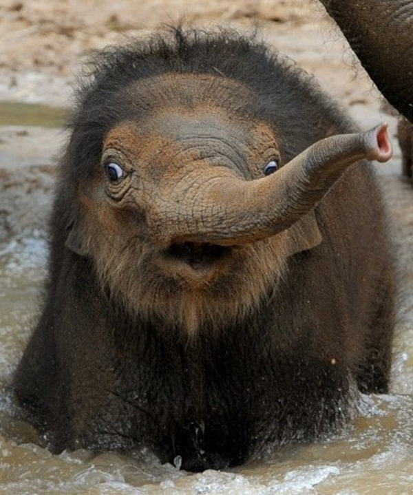 Beautiful Baby Elephant Pictures (6)