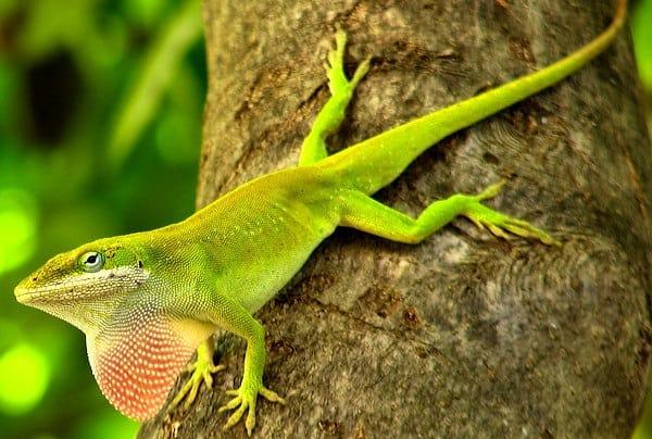 10 Amazing Creatures that Molt10