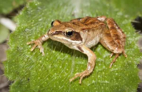 10 Amazing Creatures that Molt11