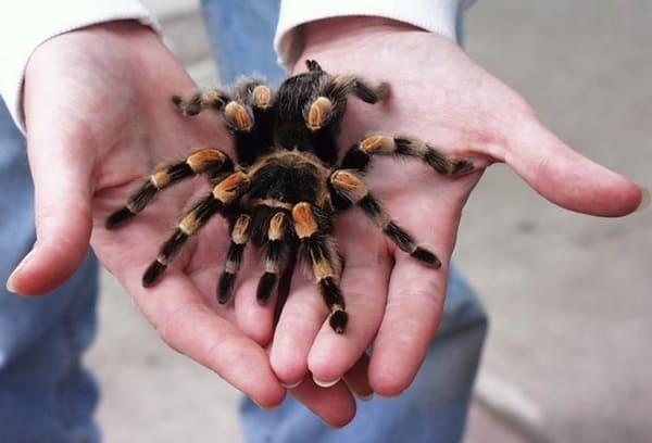 10 Amazing Creatures that Molt3