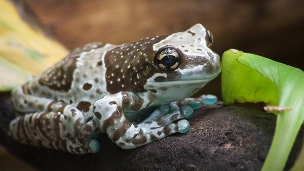 10 Amazing Creatures that Molt5