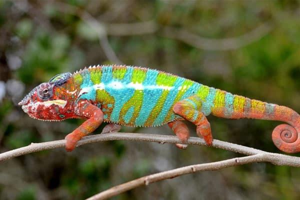 10 Amazing Creatures that Molt8