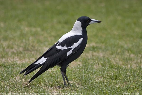 10 Birds that are most likely to kill you4