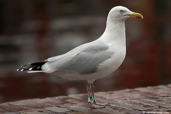 10 Birds that are most likely to kill you9