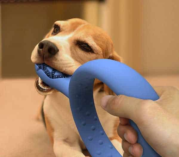 20 Brilliant Dog Care Ideas13