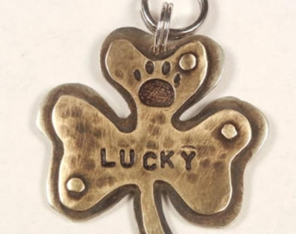 40 Cute Dog Tag Quotes and Ideas40