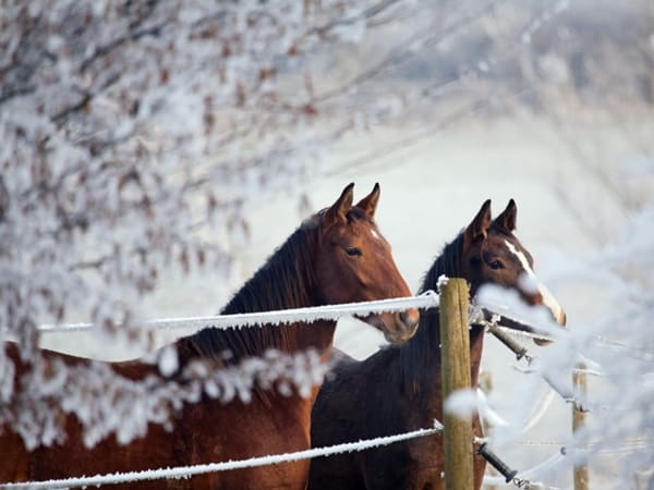 5 Tips for Preparing your Horse during Winter1