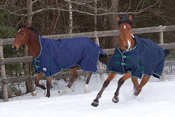5 Tips for Preparing your Horse during Winter7