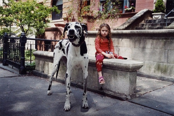 Amazing Pictures Of Great Dane (21)