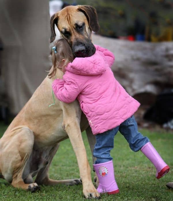 Amazing Pictures Of Great Dane (5)