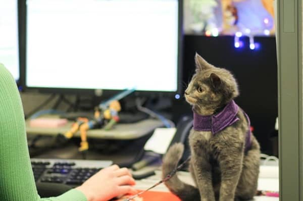 Cute Pictures of Pets Joining You at Work (21)
