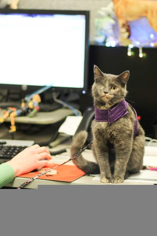 Cute Pictures of Pets Joining You at Work (3)