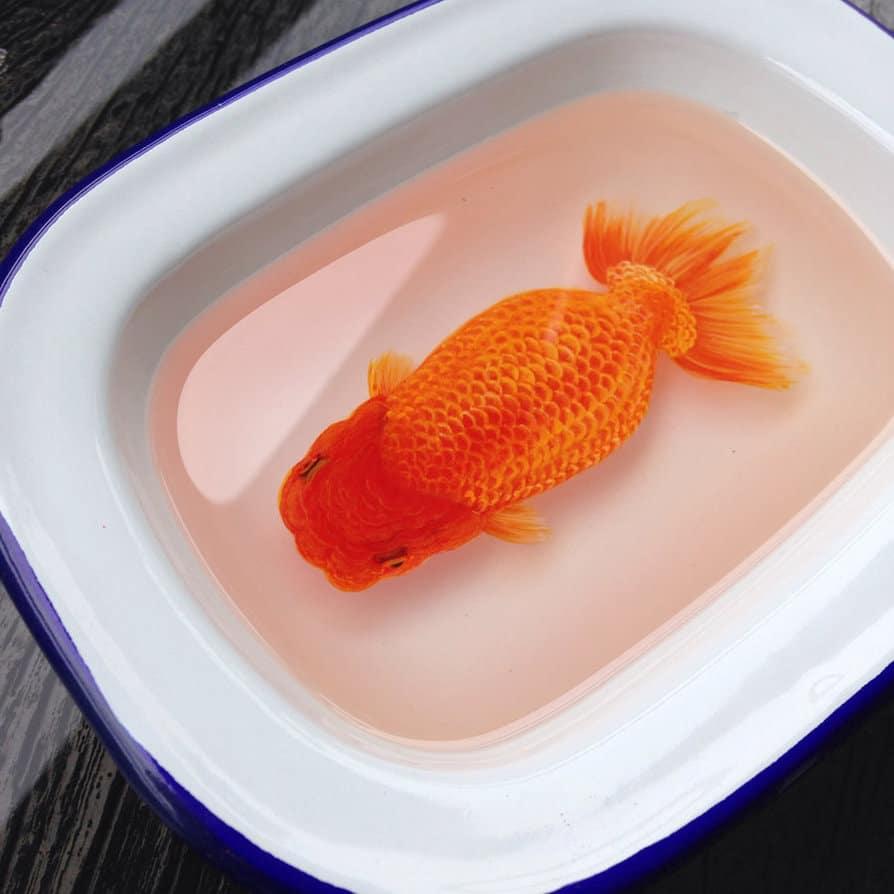 Hyper Realistic 3D Paintings of Aquatic Animals (21)