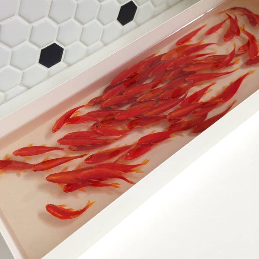 Hyper Realistic 3D Paintings of Aquatic Animals (23)