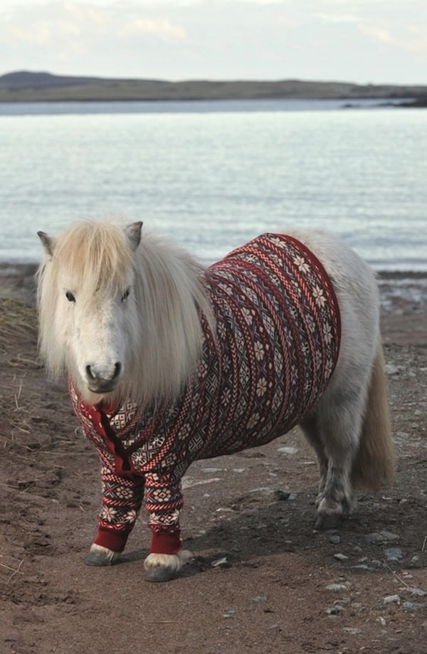 Pictures Of Pets Wearing Clothes (1)