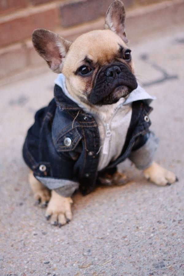 Pictures Of Pets Wearing Clothes (14)