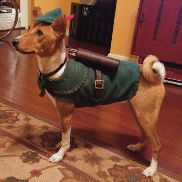 Pictures Of Pets Wearing Clothes (16)