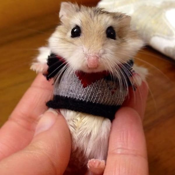 Pictures Of Pets Wearing Clothes (17)