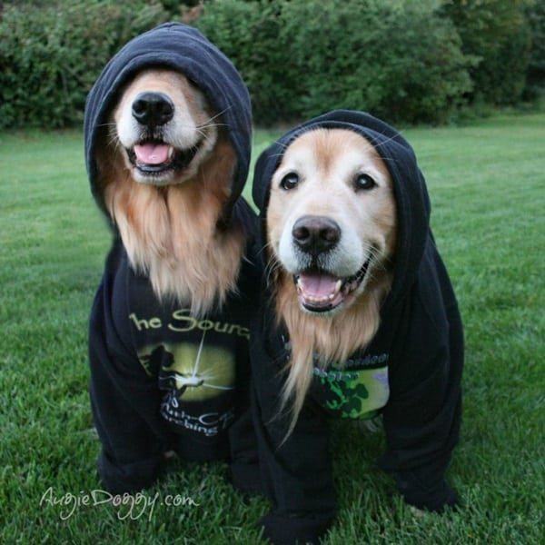 Pictures Of Pets Wearing Clothes (19)
