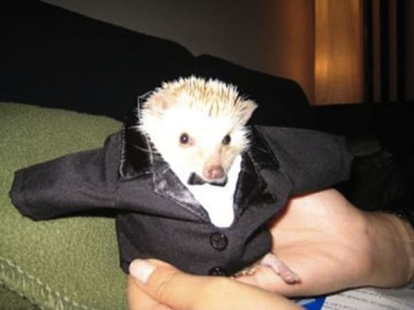 Pictures Of Pets Wearing Clothes (2)