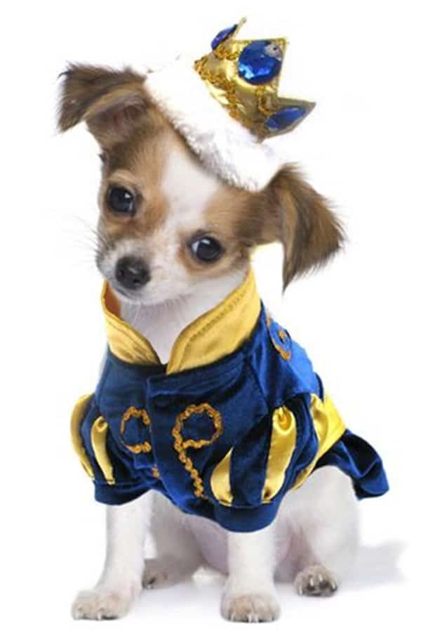 Pictures Of Pets Wearing Clothes (21)