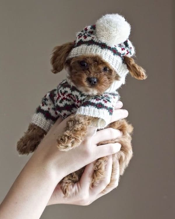 Pictures Of Pets Wearing Clothes (22)