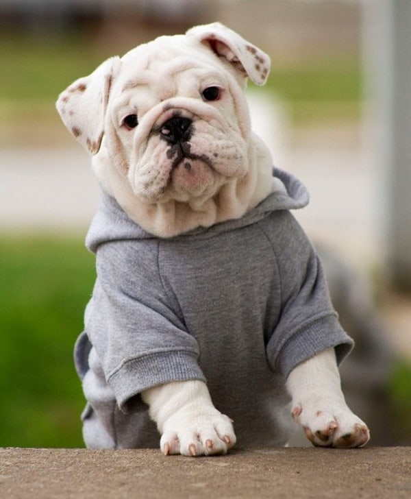 Pictures Of Pets Wearing Clothes (23)