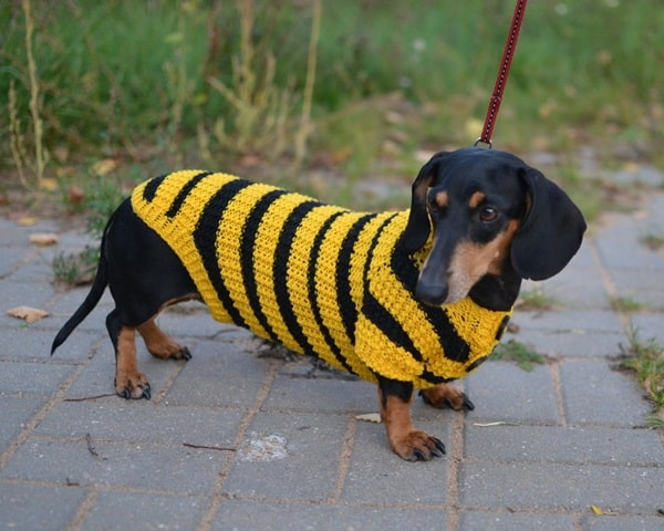 Pictures Of Pets Wearing Clothes (24)