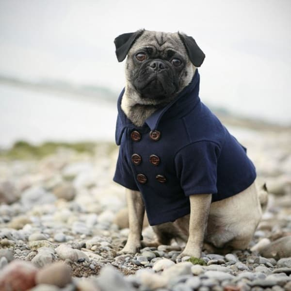 Pictures Of Pets Wearing Clothes (28)