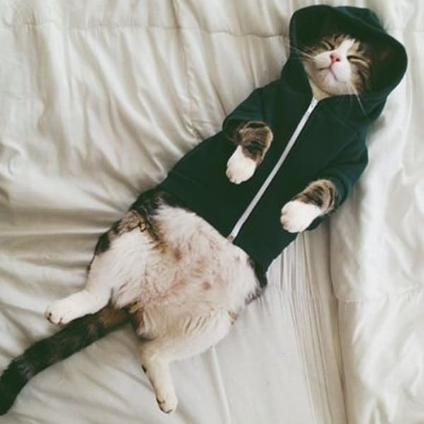 Pictures Of Pets Wearing Clothes (3)