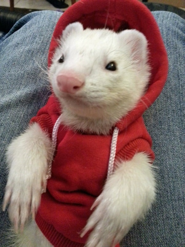 Pictures Of Pets Wearing Clothes (32)