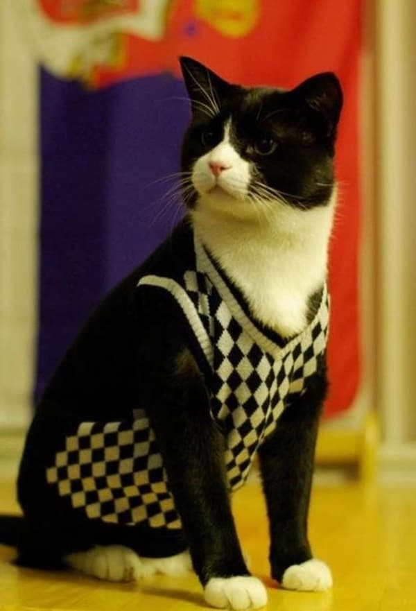 Pictures Of Pets Wearing Clothes (4)