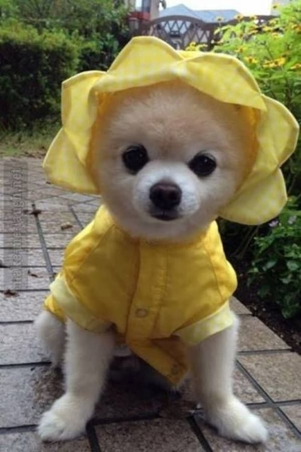 Pictures Of Pets Wearing Clothes (5)