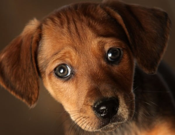 Understand Dog Bond Language and Verbal Clues6