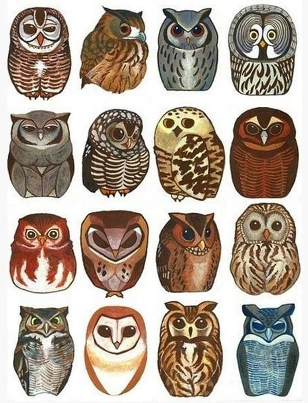 Beautiful Owl Tattoo (33)