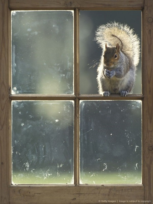 Beautiful Pictures of Squirrel (1)