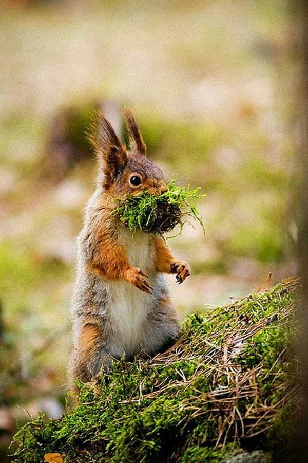 Beautiful Pictures of Squirrel (10)