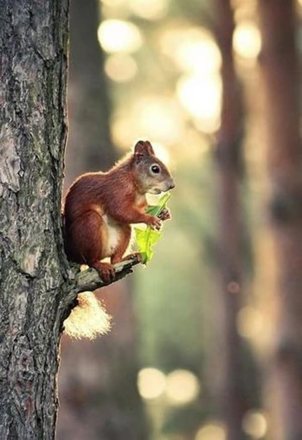 Beautiful Pictures of Squirrel (11)