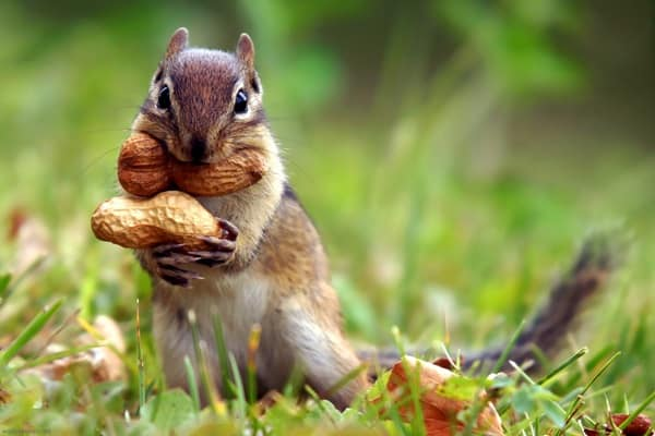 Beautiful Pictures of Squirrel (2)