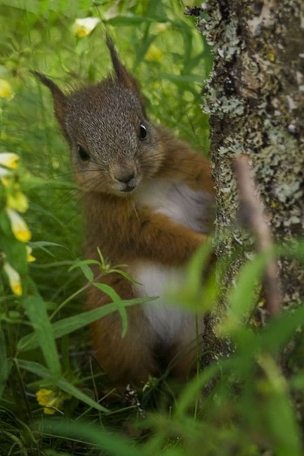 Beautiful Pictures of Squirrel (21)