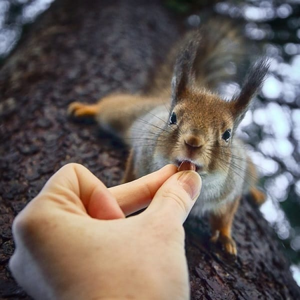 Beautiful Pictures of Squirrel (22)