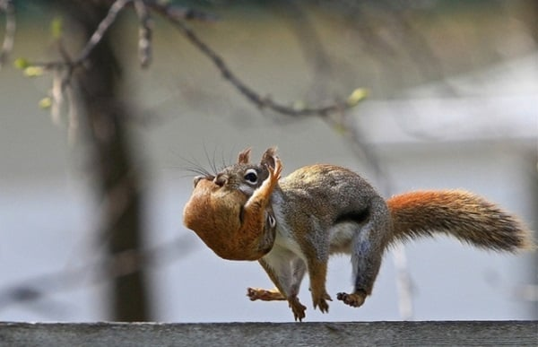 Beautiful Pictures of Squirrel (24)