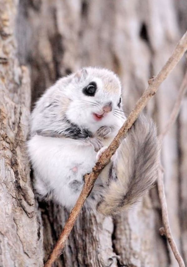 Beautiful Pictures of Squirrel (36)