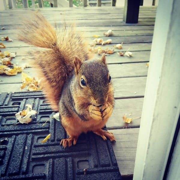 Beautiful Pictures of Squirrel (38)